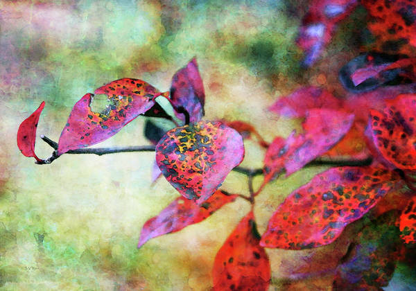 Photograph - Autumns Red Impression 6607 Idp_2 by Steven Ward