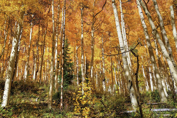 Silverton Photograph - Autumns Second Spring by Donna Kennedy