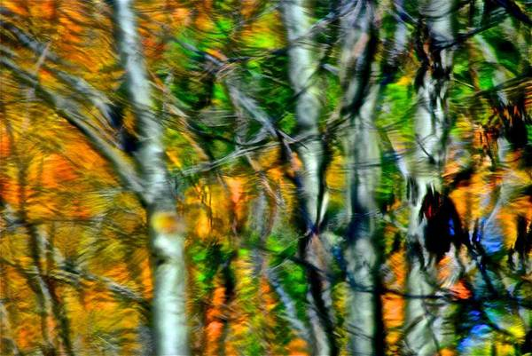 Wall Art - Photograph - Autumns Spiderweb Reflection by Frozen in Time Fine Art Photography