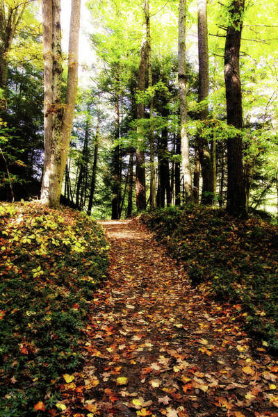 Photograph - Autumn's Trail by Trina Ansel