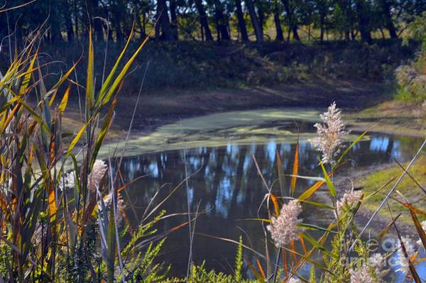 Photograph - Autumn's Tranquility by Robyn King