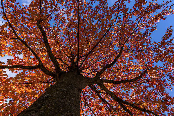 Photograph - Autumns Tree New Jersey by Terry DeLuco