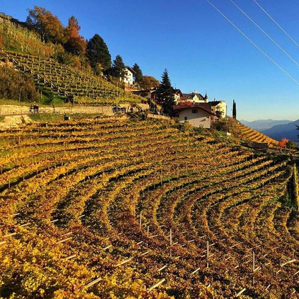 Wall Art - Photograph - Autunno A Tirolo. #altoadige by Luisa Azzolini