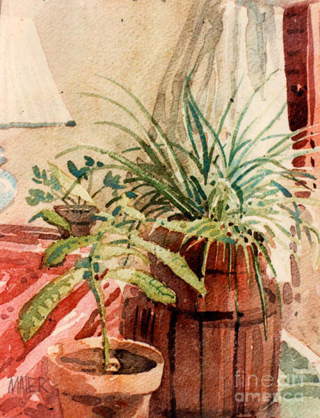 Potted Plant Painting - Avacado And Spider Plant by Donald Maier