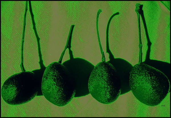 Photograph - Avacadoes by VIVA Anderson