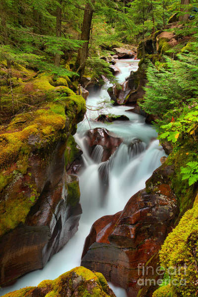 Photograph - Avalanche Creek Through The Forst by Adam Jewell