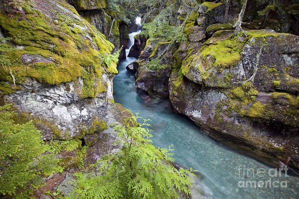 Photograph - Avalanche Gorge In Glacier National Park by Bryan Mullennix