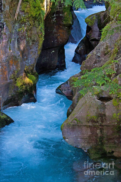 Photograph - Avalanche Gorge by Katie LaSalle-Lowery