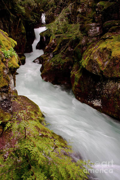 Photograph - Avalanche Gorge Spring by Katie LaSalle-Lowery