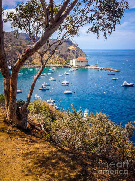 Avalon Wall Art - Photograph - Avalon Bay Catalina Island Picture by Paul Velgos