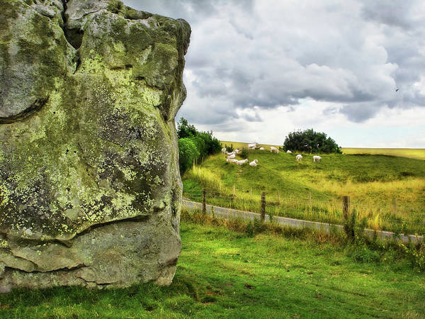 Photograph - Avebury Standing Stone And Sheep by Menega Sabidussi