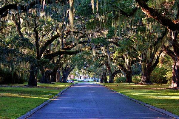 Photograph - Avenue Of Live Oaks by Cynthia Guinn
