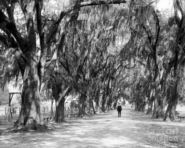 Wall Art - Photograph - Avenue Of Live Oaks, New Orleans Ca 1910  by Jon Neidert