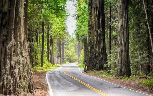 Photograph - Avenue Of The Giants by AJ Schibig