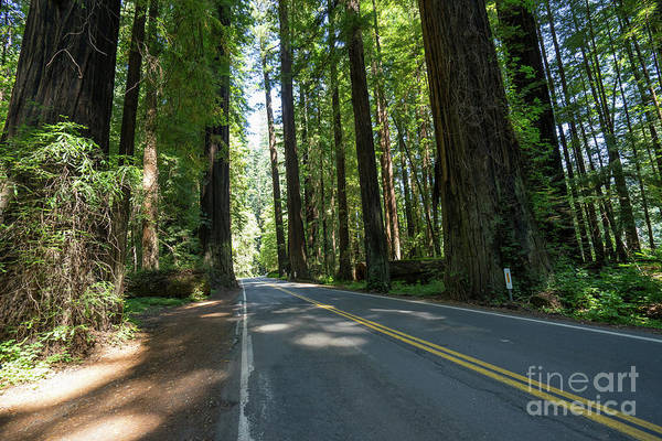 Photograph - Avenue Of The Giants Redwood Trees California Dsc5472 by Wingsdomain Art and Photography