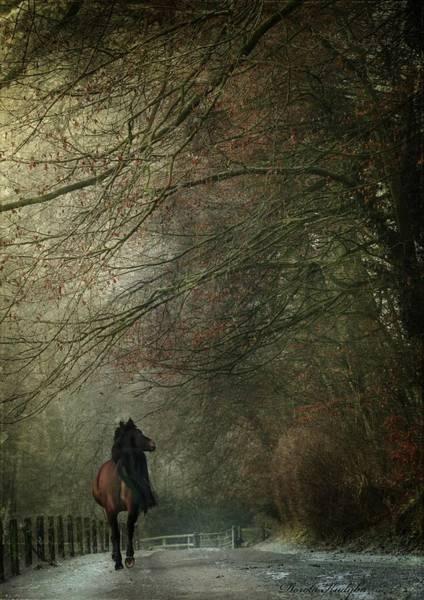 Horse Love Photograph - Avenue Walk by Dorota Kudyba