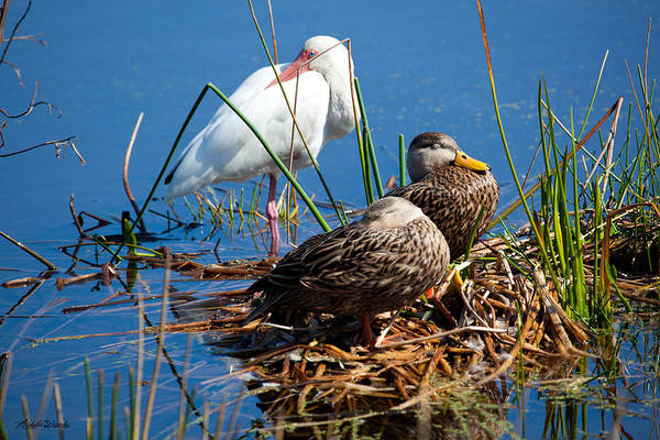 Photograph - Avian Siesta Time At Green Cay Boynton Beach Florida by Michelle Constantine