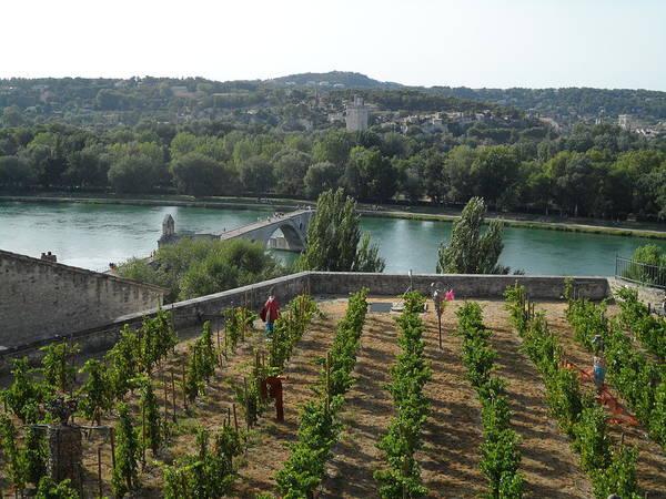 Chateauneuf Photograph - Avignon Bridge - Vine by Richard Cloutier