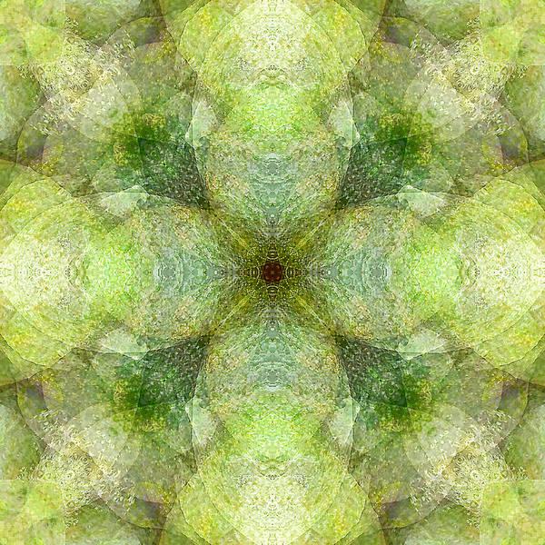 Avocado Mixed Media - Avocado Dream by Elypsis  Art