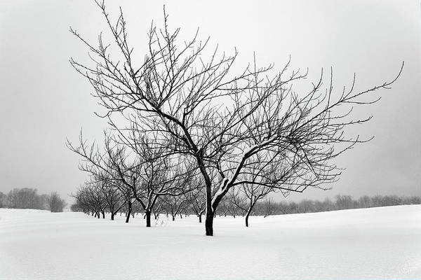 Photograph - Awaiting Spring by Patrick Groleau