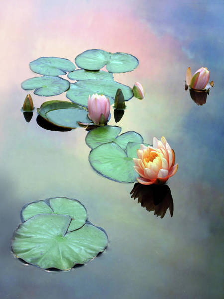 Lotus Pond Photograph - Awaken by Jessica Jenney