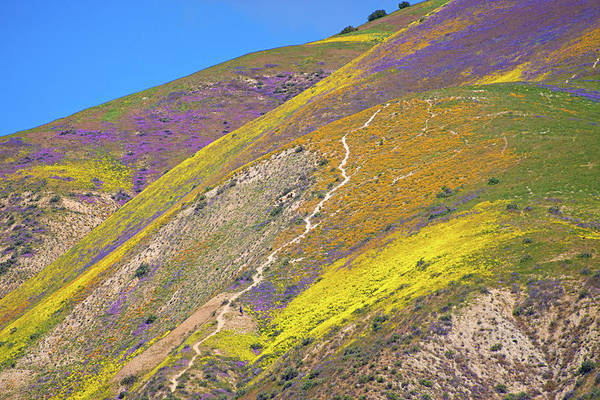 Photograph - Awash With Wildflowers - Superbloom 2017 by Lynn Bauer