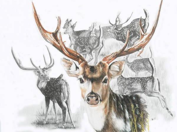 Mixed Media - Axis Deer by Barbara Keith