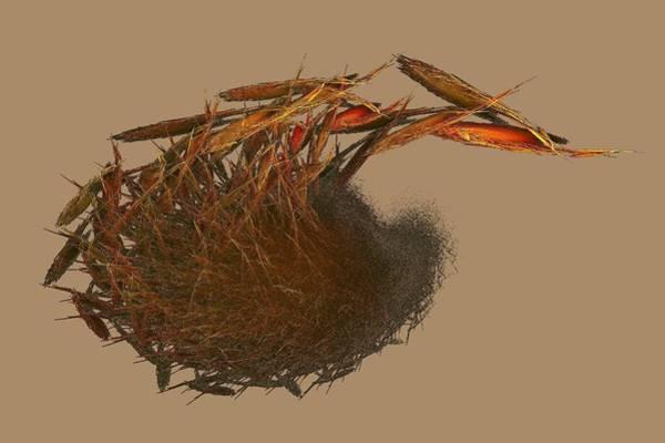 Digital Art - Ayahuazxca Root Sonora by Doug Morgan