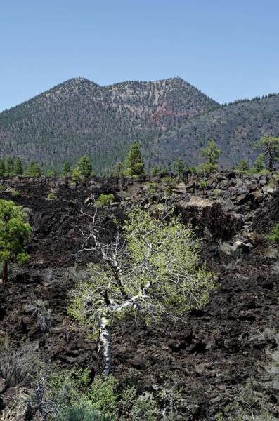 Photograph - Az Landscape From Lava Trail No. 2 by David Gordon