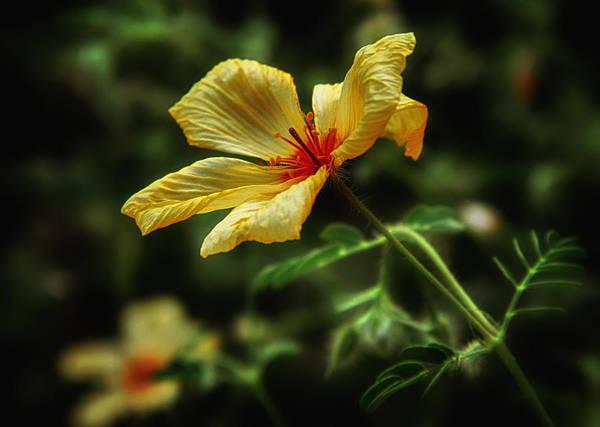 Photograph - Az Poppy by Elaine Malott