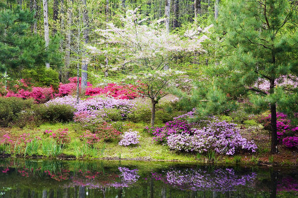 Dogwoods Photograph - Azalea Heaven by Eggers Photography