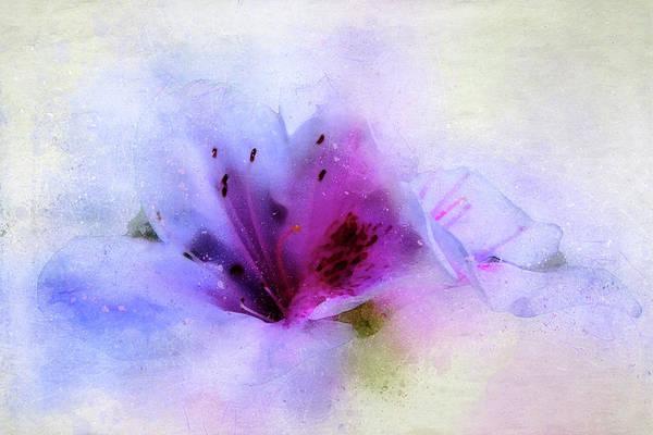 Shrub Mixed Media - Azalea Splash 3 by Terry Davis