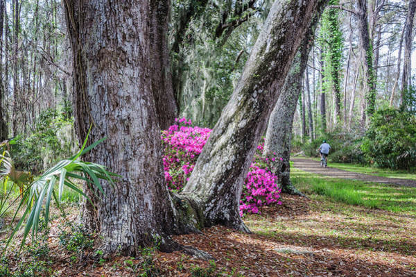 Wall Art - Photograph - Azaleas By The Bike Path by Andrew Wilson