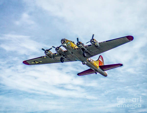 Photograph - B-17g Flying Fortress In Flight  by Nick Zelinsky
