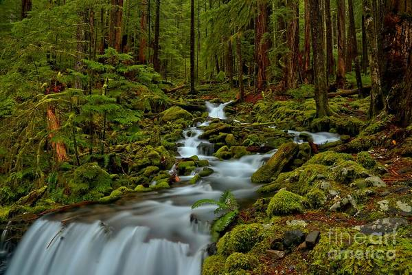 Photograph - Heart Of The Rainforest by Adam Jewell