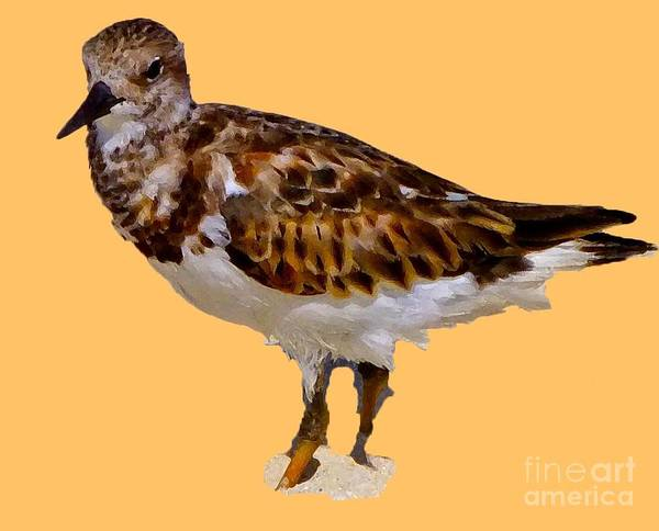 Digital Art - B Bird by Francesca Mackenney