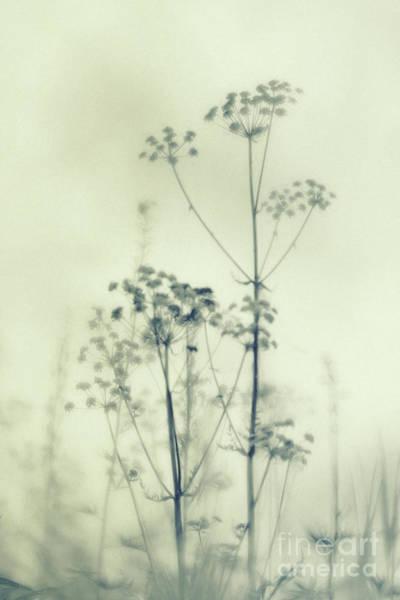 Wall Art - Photograph - Wild Flowers 3 by Priska Wettstein