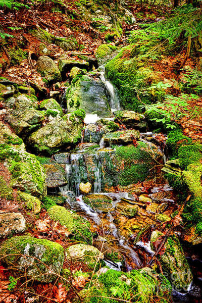 Wall Art - Photograph - Babbling Brook by Olivier Le Queinec