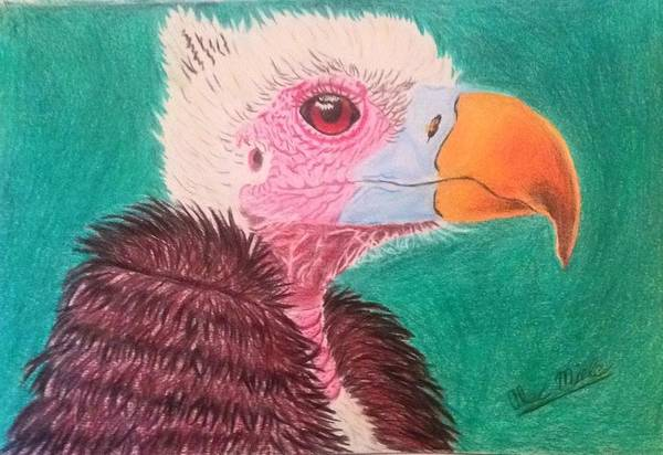 Baby Eagle Drawing - Baby Bird by Alec Miele