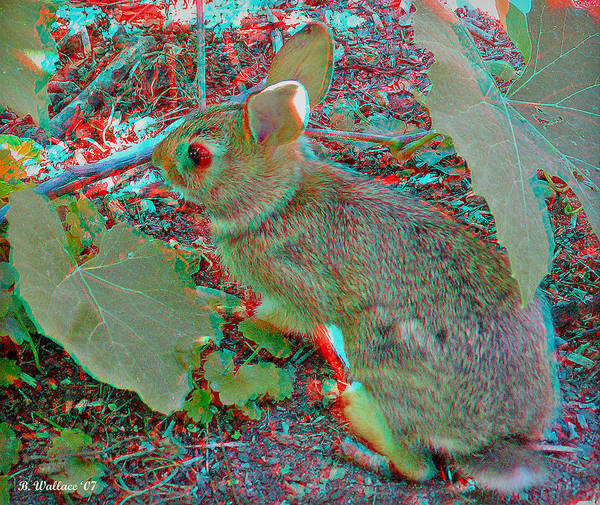 Anaglyph Photograph - Baby Bunny - Use Red-cyan 3d Glasses by Brian Wallace
