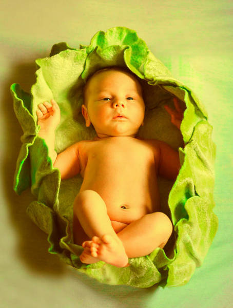 Rabit Painting - Baby Cabbage On Board by MJ Arts Collection