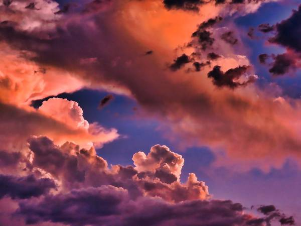 Photograph - Baby Dragon's Fledgling Flight by Judy Kennedy