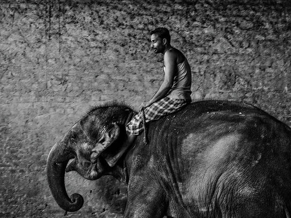 Photograph - Man And Elephant 3 by M G Whittingham