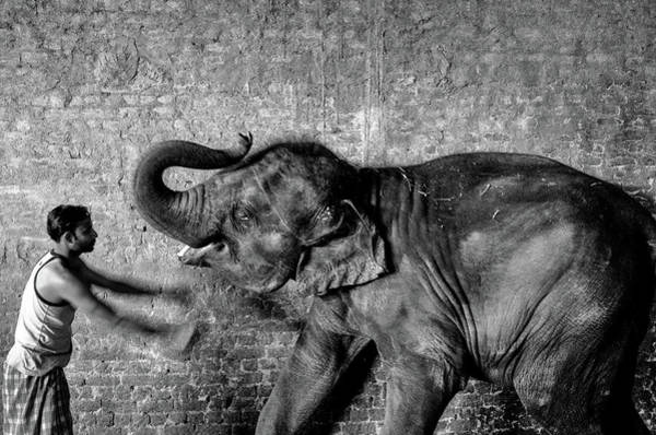Photograph - Man And Elephant by M G Whittingham