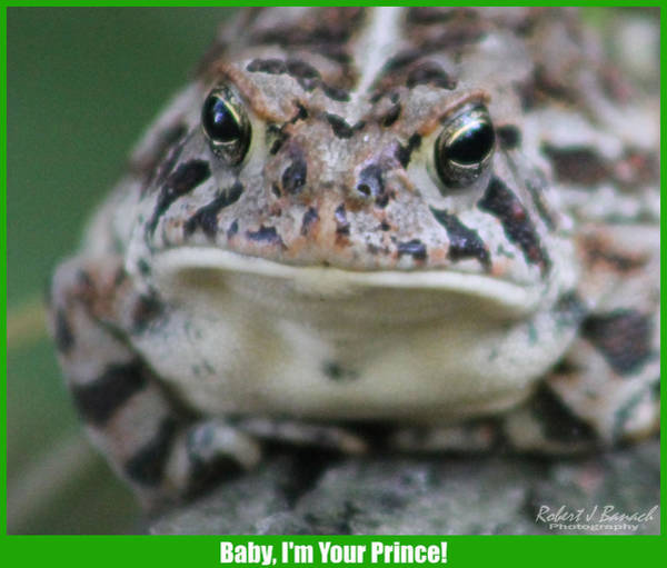 Photograph - Baby I'm Your Prince by Robert Banach