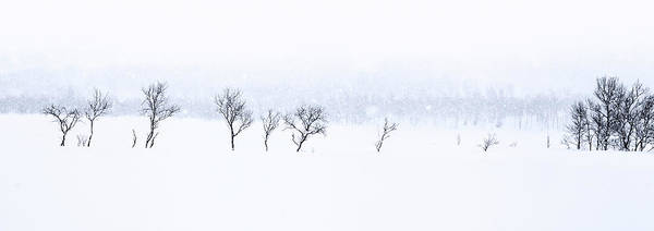 Snowstorm Wall Art - Photograph - Baby It's Cold Outside by Nigel Jones
