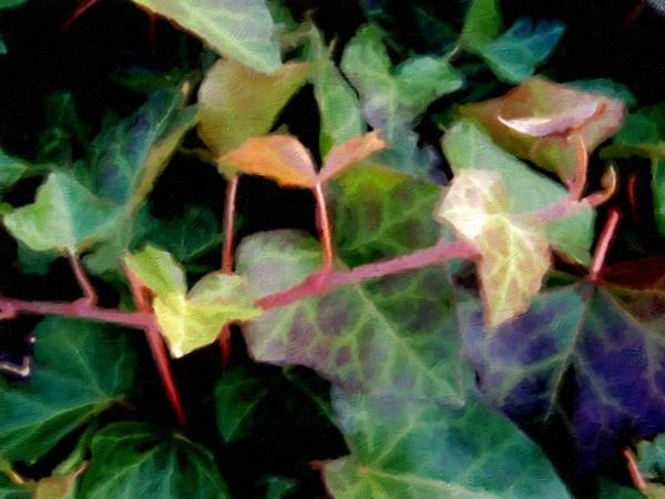 Photograph - Baby Ivy Painted by Beth Akerman