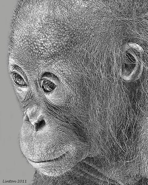 Digital Art - Baby Orangutan by Larry Linton