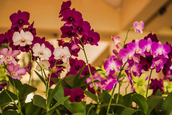 Photograph - Baby Orchids by Roberta Byram