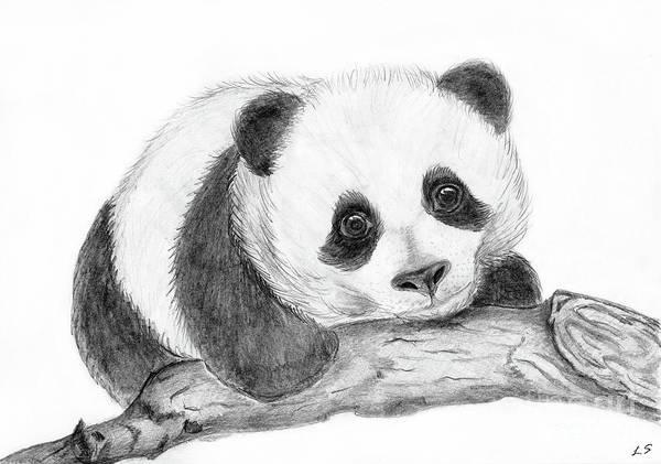 Panda Drawing Painting - Baby Panda by Sergey Lukashin